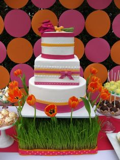 sweet and saucy shop pink and orange cake on wheatgrass