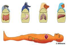 Canopic Tarros Excepto por el corazón, que fue necesario por el fallecido en el Salón del Juicio, los embalsamadores eliminan todos los órganos internos del cuerpo. Estos fueron colocados en cuatro jarrones, llamado Canopic tarros. Las tapas forman la forma de los cuatro hijos de Horus. El hígado se asoció con Imset que fue representado con una cabeza humana. Los pulmones se asociaron con Hapi que fue representado con cabeza de babuino.
