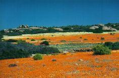 Fotografie: Corezzi Cristina - Parco di Skilpad, #Sudafrica - Lonely Planet Italia