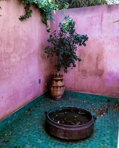 """Mi piace"": 1,325, commenti: 6 - SOFIA EL ARABI (@sofiaelarabii) su Instagram: ""Quiet Perfection 🍃...@darjlmarrakech #paradise #marrakesh #pink #wall"""