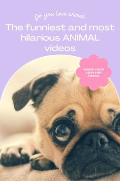 Top 10 Cutest funny animal — Small Cutest animal We Can't Get Enough Of Companion Dog Excellent. follow me for more! #dog #dogs #pet #doglover #doggy #puppy #puppies #puppys #dogoftheday #doglove #dogphotography #dogvideos #dogvideo dog, dogs, doglover Funny Animal Videos, Cute Funny Animals, Funny Dogs, Companion Dog, Cute Dogs And Puppies, Dog Photography, Super Funny, Dog Lovers, Puppys