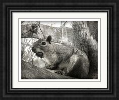 Hello Framed Print By Andrew Hunter