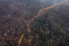Current President, Deep Forest, Amazon Rainforest, Environmentalist, A Decade, High Level, Bolivia, Aerial View, New Jersey