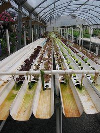 What Plants Can Be Grown Hydroponically. Hydroponic growing is a cultivation method in which plants are grown using nutrient mixes rather than soil. Virtually any plant that grows in soil can be grown… Hydroponic Farming, Hydroponic Growing, Aquaponics Diy, Aquaponics System, Hydroponic Gardening, Growing Plants, Organic Gardening, Aquaponics Greenhouse, Greenhouse Plans