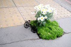 Pothole Garden with Daisies and a miniature Bicycle...cute
