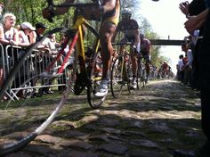 Arenberg Forest from the one day classic race:  Paris-Roubaix