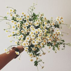 a bouquet of daisies