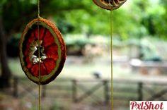 orange memory | Un singur fruct sau leguma - PxlShot.ro