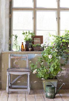 """<strong>Fönster med patina. </strong><br>Här pryder murgrönan fönsterbrädan och en stor pelargon får stå på golvet nedanför. Pelargon, 595 kronor och plåtkruka, 395 kronor, Floristkompaniet. Spegel, 850 kronor, Fru Lotta,Gardin av metervara """"Zen"""" 1 975 kronor, Frank och Coordinata. Bruna glasflaskor, 45 kronor, In the Mood. Liten minipelargon, 85 kronor, Floristkompaniet. Grön glasflaska, 599 kronor, House doctor. Stol, 850 kronor, Knut och Svea."""