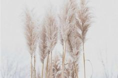 Who knew dried foliage could be so cool? Wheat, pampas grass and dried flowers are perfect for a Christmas-free, winter themed wedding. Grass Decor, Image Nature, Flower Power, Bloom, Pure Products, Inspiration, Instagram, Savage People, Wallpapers