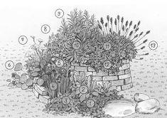La spirale aromatique - Raffa ::: Le Grand Ménage :::1 1 - Cresson de fontaine 2 - Oseille 3 - Menthe, Mélisse, mellifère, et/ou basilic 4 - Ciboule et/ou ciboulette 5 - Ail et/ou petite Pimprenelle  6 - Capucine et/ou aneth et /ou cerfeuil à la floraison  7 - Aneth et/ou origan, mellifère, et/ou bourrache,  8 - Persil et/ou armoise ou absinthe 9 - Estragon ou thym et/ou romarin 10 - Sauge officinale ou sauge sclarée 11 - Marjolaine 12 - Plante vivace de rocaille 13 - Lavande et/ou hysope,