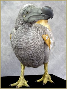 Taxidermia (o dodo digno)