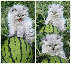 This is me rn… unkempt and feral and all about watermelon