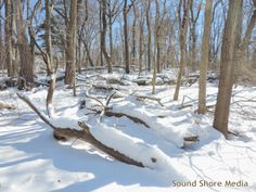 Photo of Nature Woods Park after Blizzard