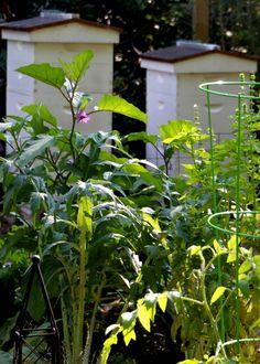 Tillys Nest- beehives in garden beekeeping tips