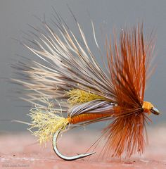 October Caddis Humpy pattern. See the recipe on www.wcflies.com/blog/