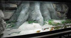 diy aquarium background - Google Search
