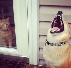 Köpeklerin her zaman dost olmadığının kanıtı fotoğraflar