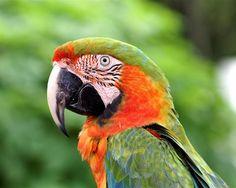 http://www.petcarevision.com/Parrot/