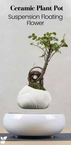 A very beautiful rare magnetic levitating floating flower in a pot, with a white colour ceramic base it utilises. Any potted plant can be planted in the flowerpot. (Do not exceed Max levitating weight). Air Plants, Potted Plants, Cactus Plants, Floating Plants, Floating Flowers, Ceramic Plant Pots, Natural Living, Decoration, Bonsai
