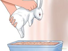 ♥ Small Pet Care ♥ Image titled Litter Train a Rabbit Step 12 Bunny Cages, Rabbit Cages, House Rabbit, Angora Rabbit, Pet Rabbit, Mini Rex Rabbit, Rabbit Litter, Dwarf Rabbit, Holland Lop Bunnies