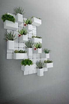 Creative Ways To Wall Display House Plants With Cactus Plant Wall, Plant Decor, Deco Nature, Deco Floral, Terraria, Indoor Plants, Indoor Gardening, Gardening Tips, Wall Garden Indoor
