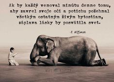 Citáty | Cesta Lásky Cut Animals, Cat Facts, Karma, Elephant, Education, Words, Quotes, Life, Psychology