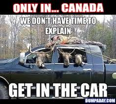 Laugh out loud on this humor site with funny pictures and internet memes. Funny Car Memes, Funny Animal Memes, Car Humor, Funny Animal Pictures, Funny Animals, Funny Quotes, Moose Pictures, Hunting Pictures, Car Jokes