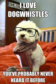 I don't really get why it's talking about dog whistles, but the scarf and glasses are just too cute on him!!