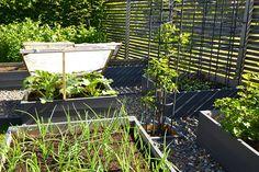 Cattis och Eiras Trädgårdsdesign: Före och efter – Köksträdgård