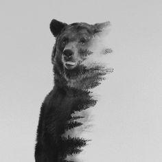 Bear tattoo design