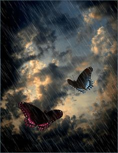 Butterflies In The Rain,Animated - butterflies Photo