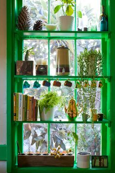 the bold green kitchen window shelving