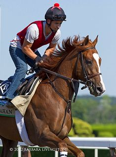 The 2012 Belmont Stakes...11 of the 12 contenders | Daily Racing Form
