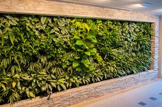 Recessed living wall panel Green Building, Building Design, How To Dry Basil, Living Walls, Herbs, Images Photos, Plants, Plant Wall, Herb