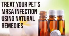 According to a recent study, people with MRSA (methicillin-resistant staphylococcus aureus) infections can transmit the bacteria to household pets. http://healthypets.mercola.com/sites/healthypets/archive/2016/03/20/pet-mrsa-infection.aspx