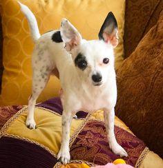 Siggy from Streeterville  #highrisepetcare #dogsofchicago #chicagodogdiary #dog #dogs #puppy #dogsofig #chicago #dogsofinstgram #dog