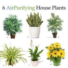 1. Bamboo Palm: elimina formaldahyde y actúa como un humidificador natural.  2. La planta serpiente: para absorber los óxidos de nitrógeno y formaldahyde.  3. Areca Palm: para la limpieza del aire en general.  4. Planta araña: para eliminar el monóxido de carbono y otras toxinas e impurezas.   5. Lirio de paz: son colocados en los baños conocidos para la eliminación de las esporas de moho. eliminar formaldahyde y el tricloroetileno.  6. Gerbera Daisy: eliminar el benceno en el aire,