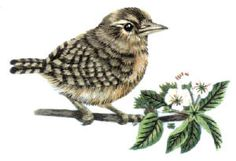 Tanya Berlin's Wren on Blossom Branch - Needle-painting