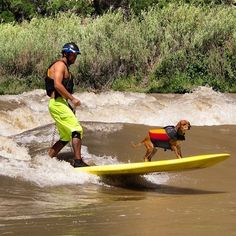 Mike Tavares river SUP Surfing with Shred Dog on a standing wave the Colorado River near Glenwood Springs, CO.