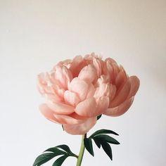Lambert Floral Studi
