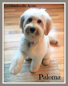 Check out our list of all upcoming Goldendoodle litters and Double Doodle litters below. Please fill out the puppy application and we will contact you. Faith Based Movies, Goldendoodle Grooming, Double Doodle, Golden Doodles, Sully, Puppy Love, Breads, Puppies, Pets