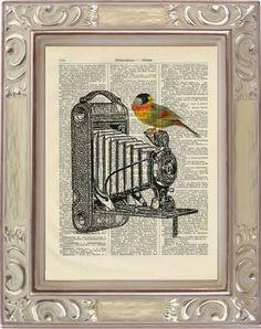 KAMERA+Vogel++i157+Druck+antike+Buchseite+von+Vintage+Prints+auf+DaWanda.com