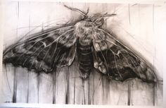 April Coppini // aprilcoppini.com Unique Drawings, Drawing Techniques, Butterfly Drawing, Insect Art, Natural Forms, Art Sketchbook, Portrait Art, Animal Drawings, Creative Art