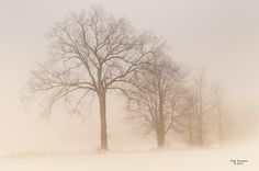 A winter fog hangs over a row of trees in northern Michigan.