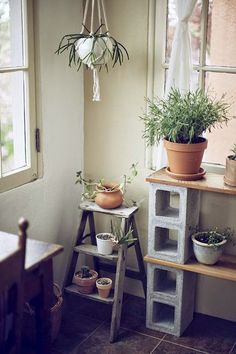 DUSTY: Hanging plant holders
