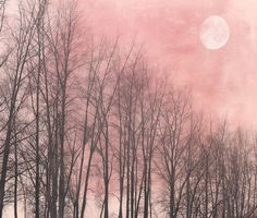 """Full moon landscape photography twilight trees nature bare branches - """"Pink moon""""  8 x 10"""