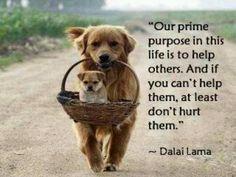 First, do no harm...