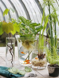 water plants indoor 34 Fabulous Indoor Water Garden Ideas To Refresh Your Interior Decor - Creating indoor water gardens is almost equivalent with taking the pond from outside and bringing it inside in smaller dimensions. Most of the people .