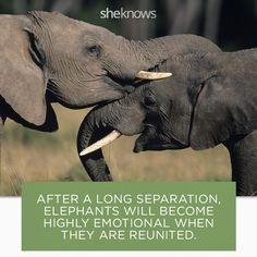 22 Elephant facts that prove they deserve better: Elephants catch a break